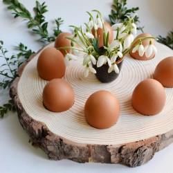 Kütük Yumurtalık